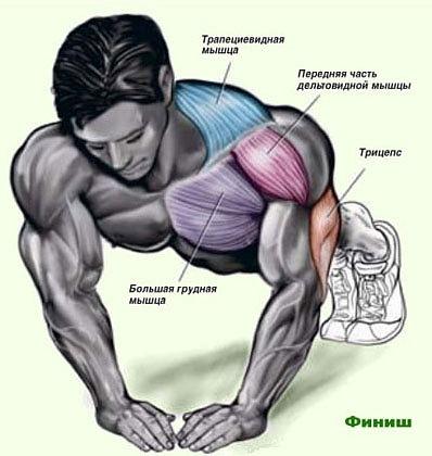 Анатомия и схемы упражнений